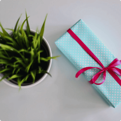 Wrapped gift on white surface next to a small plant